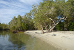 Beautiful peaceful beaches at Pemba dive and Bush Camp