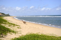 http://www.mozambiquetravelservice.com/accommodation/xai_xai_accommodation.html